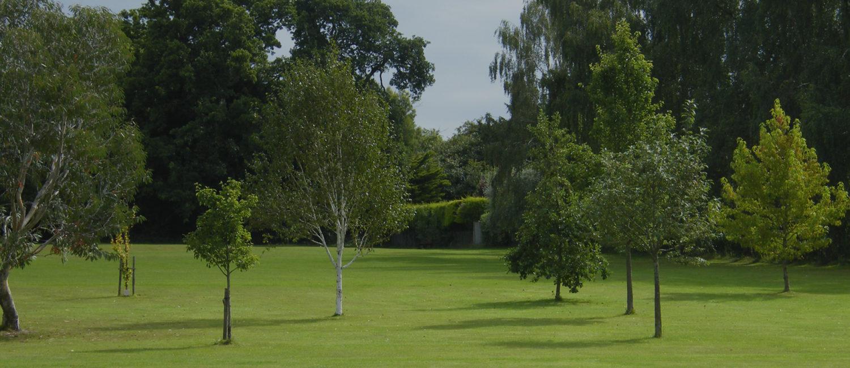 Trees in Finchampstead Memorial Park