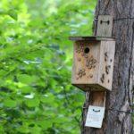 Wooden bird nestbox on a tree