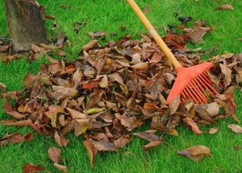 leaves on grass with a rake