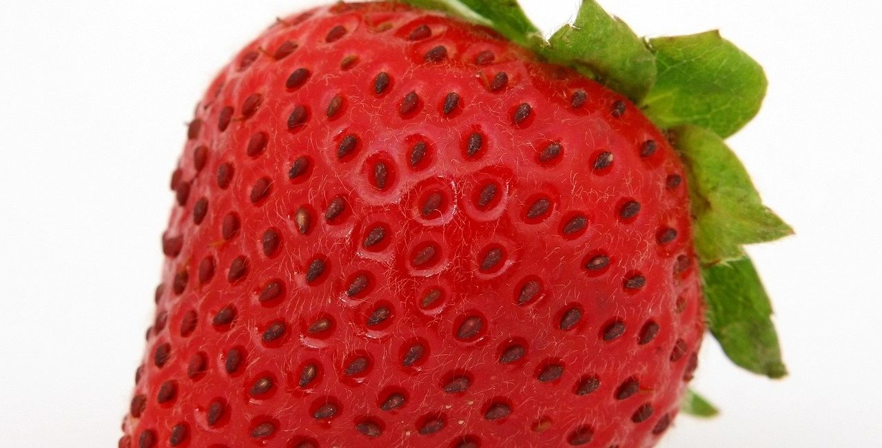 one red strawberry with its calex